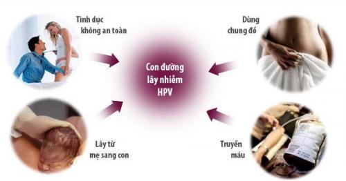 duong-lay-nhiem-sui-mao-ga