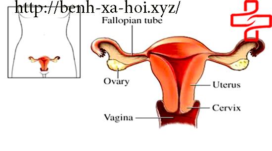 benh-viem-ong-dan-trung-man-tinh